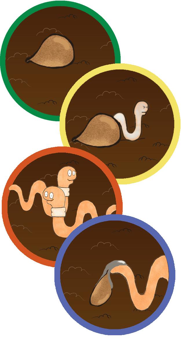 worm-life-cycle